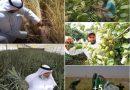 பாலைவனத்தை பசுமையாக்கிய ஐக்கிய அரபு இராட்சியத்தின் ஆட்சியாளர்கள்!! (Video)